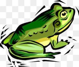 kisspng-clip-art-toad-frog-vector-graphics-illustration-amphibian-frog-vector-image-5c7ce940560148.1141157315516900483523