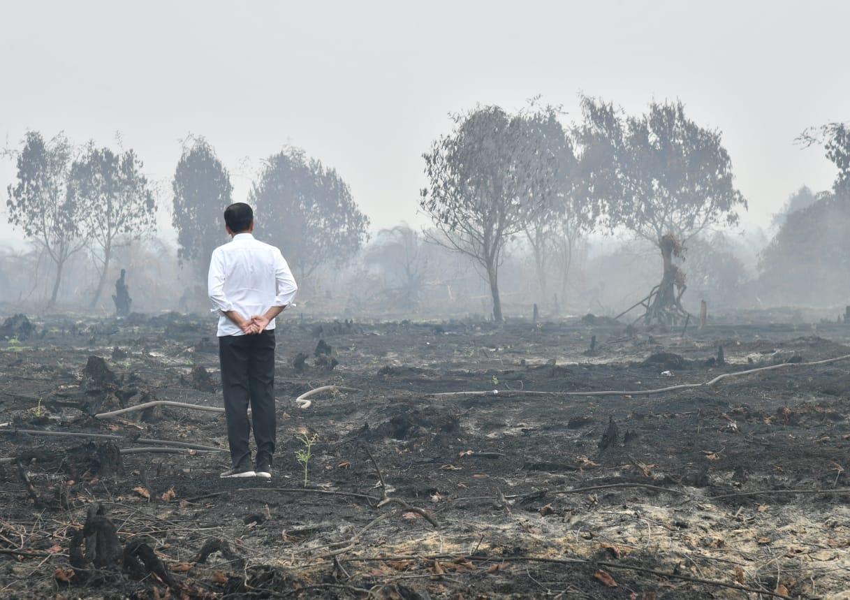 Ternyata Perusahaan Besar Dalang Kabut Asap, Konglomerat Kita