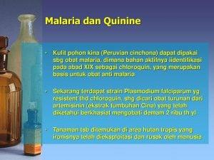 Tanaman Kina Terbukti Manjur Sembuhkan Malaria, Bisa Untuk Sembuhkan Virus Corona Juga?