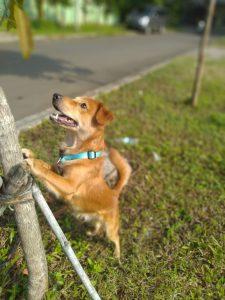 Ternyata Pelihara Anjing Bisa Turunkan Risiko Penyakit Jantung