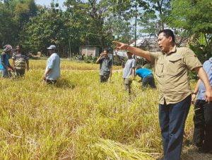 BULOG Dukung Pembangunan Proyek Food Estate  di Kalimantan Tengah