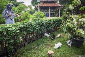 Bermain Kelinci Di Tengah Pandemi