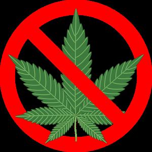 cannabis12547451280-1068×1068