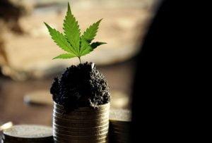 Keputusan PBB Tentang Klasifikasi Ganja Bukan Legalisasi