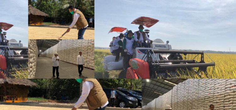 BULOG: Stok Beras Nasional Aman Capai 1 Juta Ton
